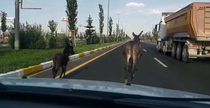 Trafikte eşek var!